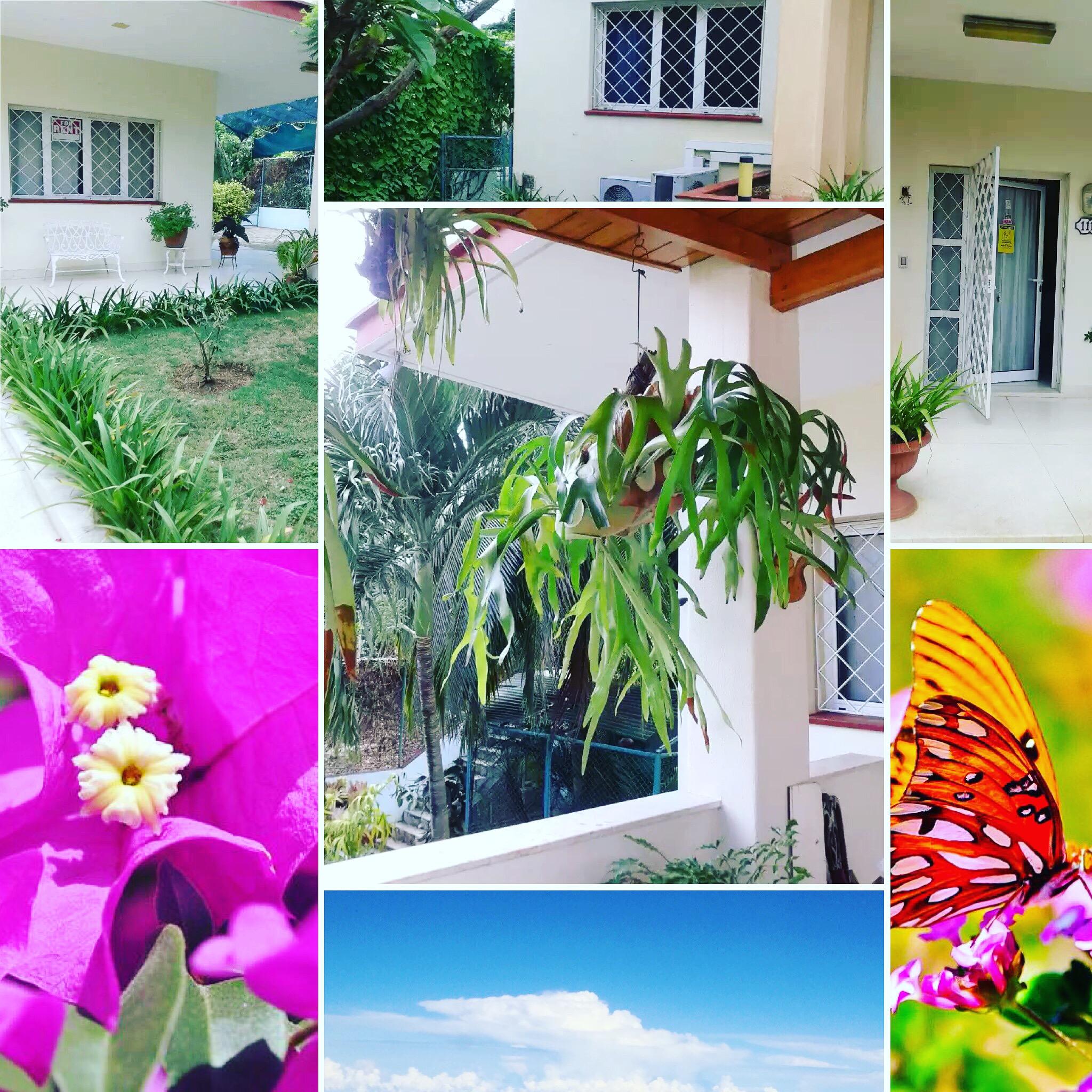 "B&B BOUTIQUE VILLA CASA DOLCE CASA -CDC- LA HABANA, CUBA. ""Habitacion La Adelfa"" photo 5875374"