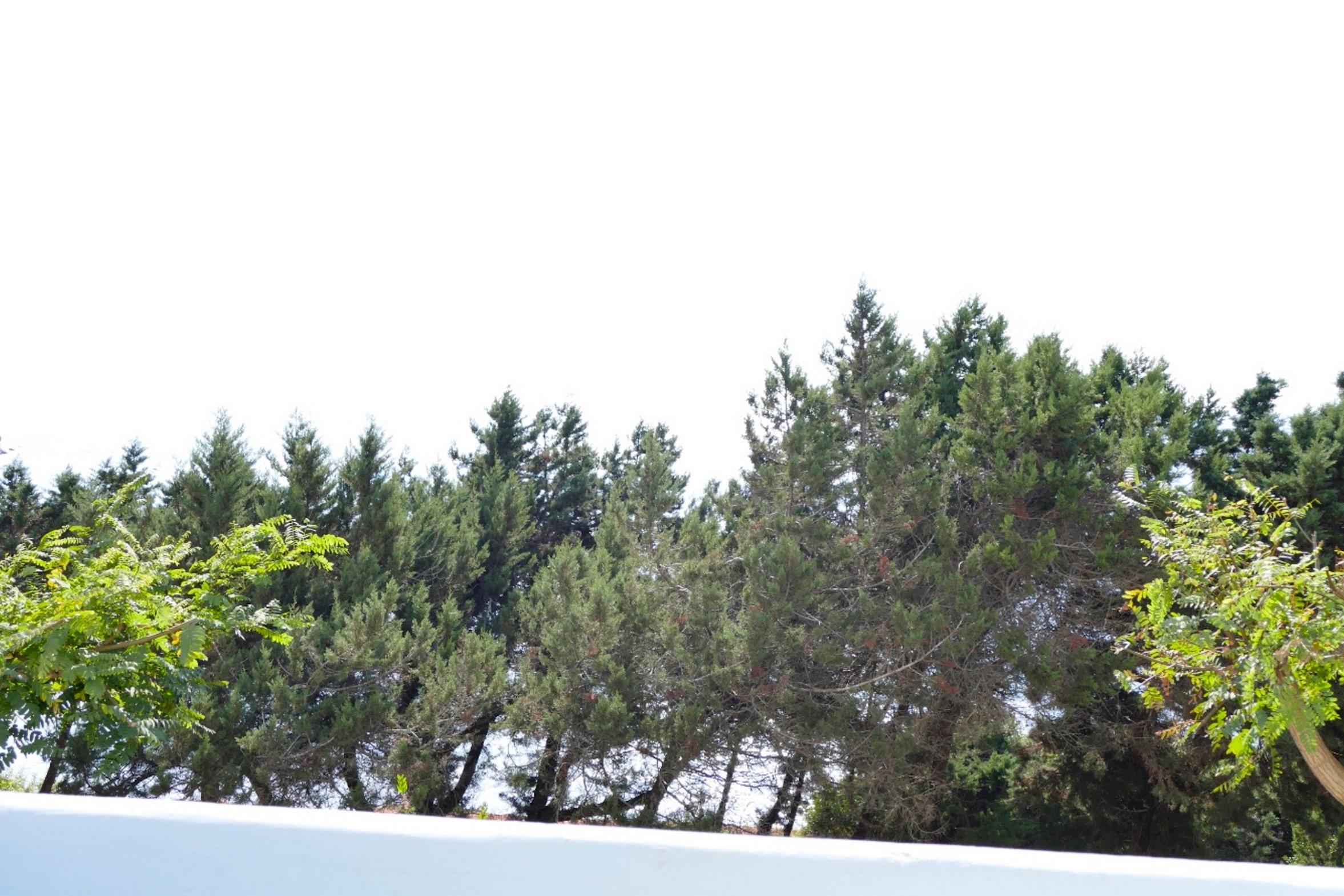 Apartment Alba Sunrise APT  IBZ1024 T4 photo 24321201