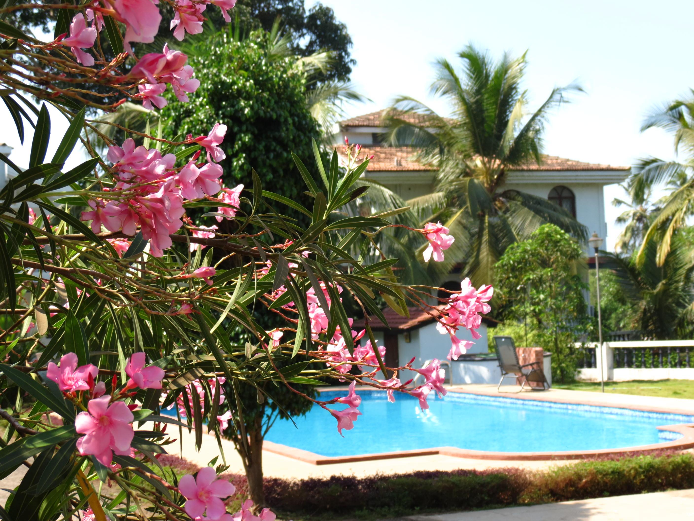 Apartment 10  Spacious  serviced villa central arpora    WiFi photo 18381229