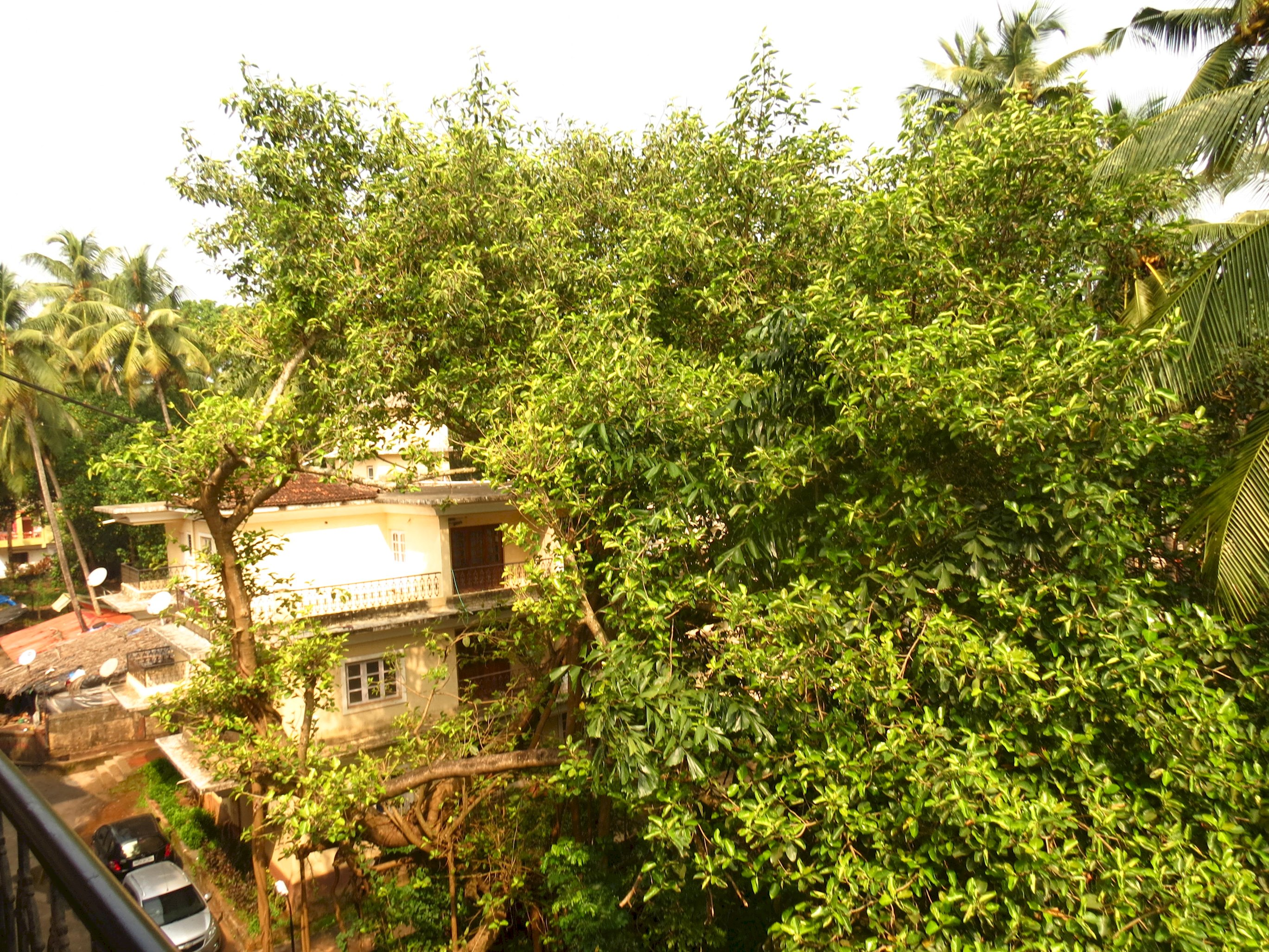 Apartment 38  Central Calangute Serviced Apartment   WiFi photo 19599030